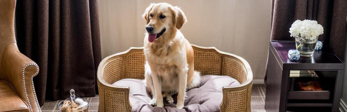 Хотели за/с кучета